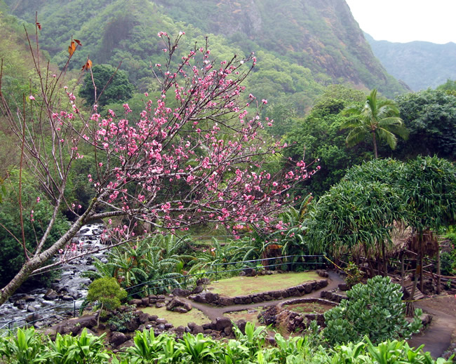 iao valley wailuku maui